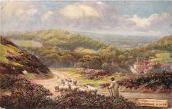 COLDHARBOUR, LEITH HILL