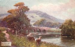 THE RIVER MOLE NEAR BOXHILL
