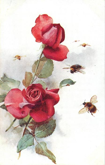 four bees fly right of two red roses, one bee left