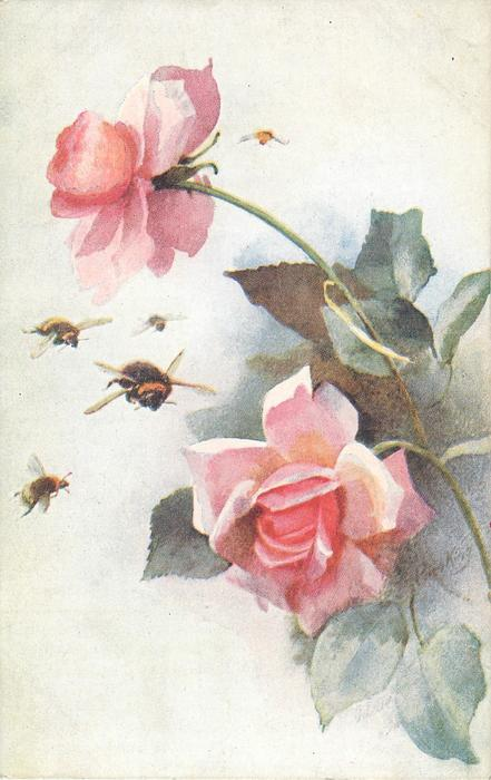 four bees fly left of two pink roses, another bee above