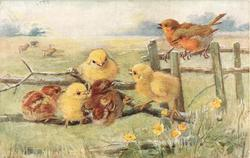 two robins on fence, five chicks on branch