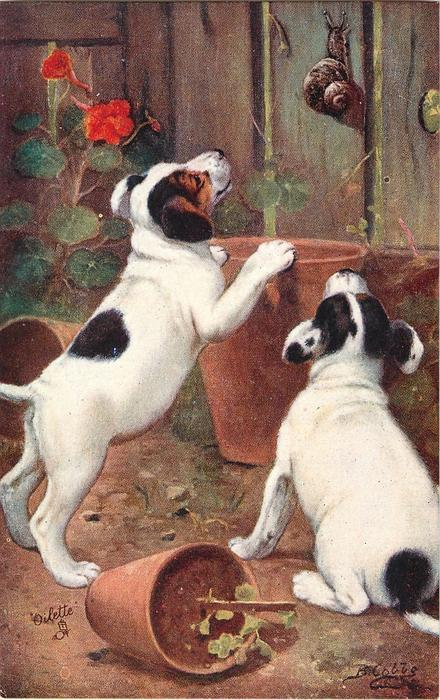 two black and white puppies are playing with snail climbing up a wooden fence, knocking over flower pots