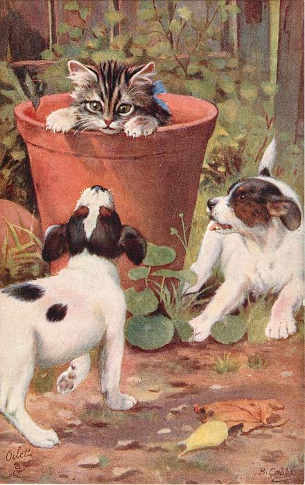 two white and black puppies try to get at a kitten in a flower pot
