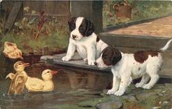 two puppies watching three ducklings swimming