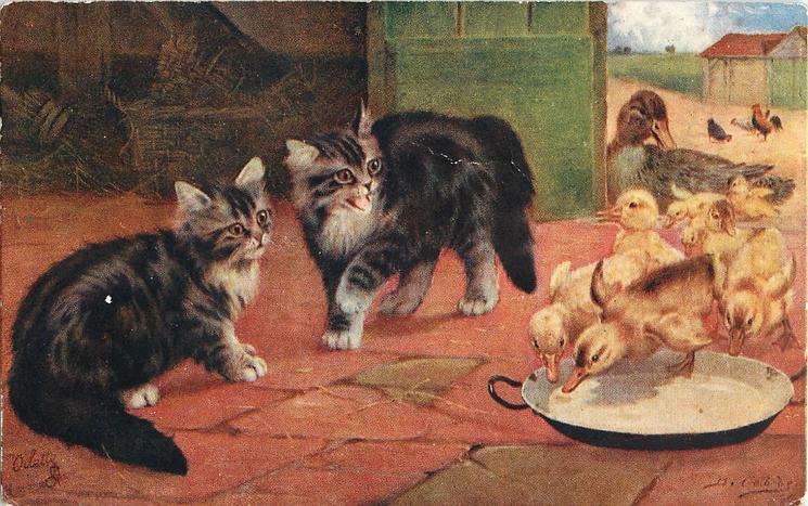 Barn Cats Kittens For Adoption Chittenden County Vt