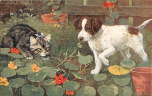 kitten and puppy in the garden watching a bee on a  flower