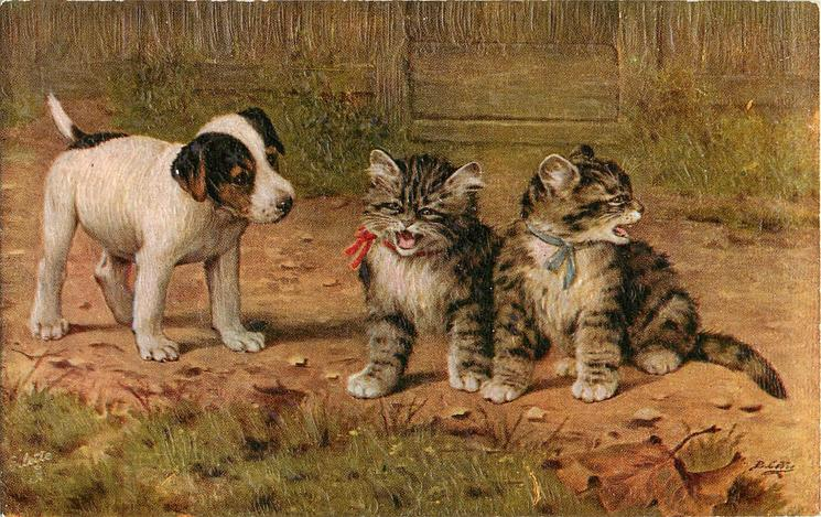 two cats right, puppy at left looks at them, left cat has red ribbon, right cat has blue ribbon