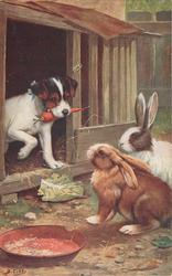 two rabbits, puppy with carrot in mouth