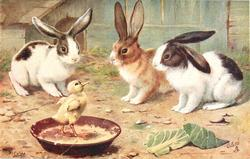 three rabbits watching a duck in their pan of food