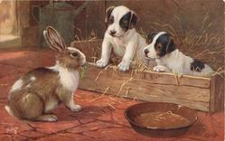rabbit looking at two puppies in box of straw