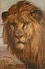 lion on velt, head only, facing left, looking front