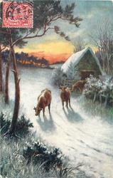 three cows wander on snow road, shelter behind last cow