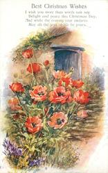 BEST CHRISTMAS WISHES  (poppies in front of cottage door)