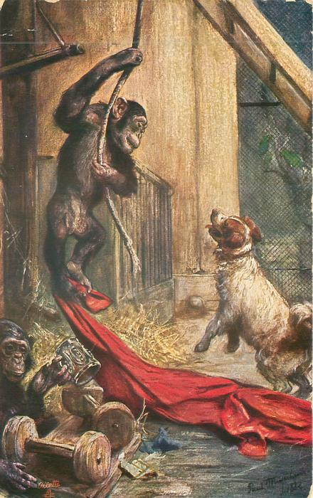 ape hangs from rope looking down on dog, red sheet, another holds stein