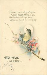 NEW YEAR GREETINGS  bird perches on blossoming branch
