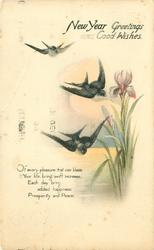A NEW YEAR GREETING  verse, swallows & irises