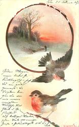 circle insert of man walking in snow, trees left , 2 robins below, one flying one on branch