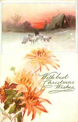 oblong inset, two people follow sheep coming forward on snowy road, four orange/red mums below