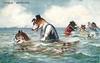 brown and white dog teaching tabby cat to swim