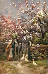 orchard in bloom behind stone wall, ducks go through gate, woman with basket under arm left