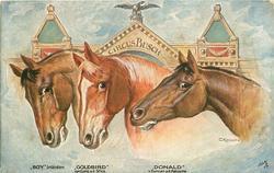 "three horses heads in fronyt of CIRCUS BUSCH building, ""BOY"" IRLANDER, ""GOLDBIRD"" VON CURIO A.D.SILICA, ""DONALD"" V. DUNCAN A.D. NATUSCHE"