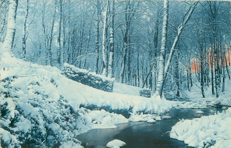 winter snow scene, stream meanders back to dense silver birches