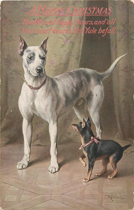 GREAT DANE AND TOY TERRIER