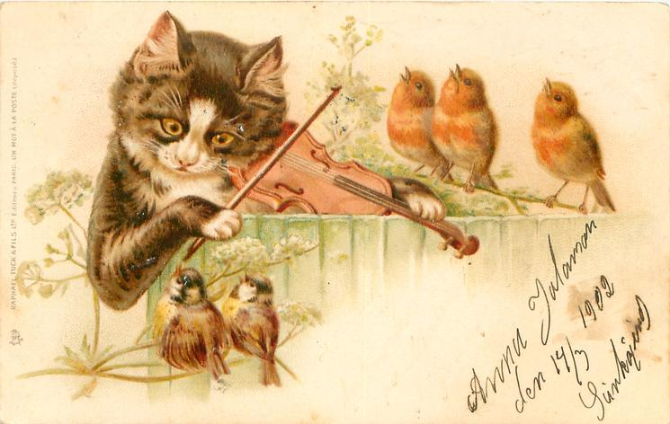 cat behind fence plays violin to two sparrows & three robins