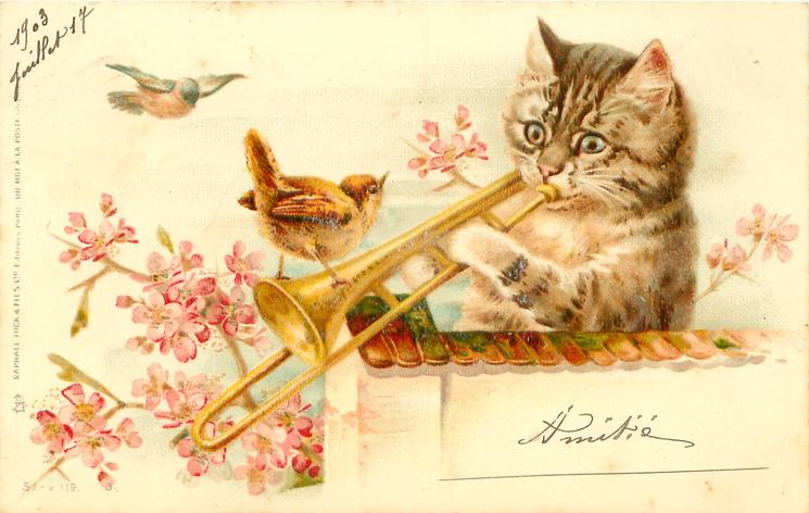 cat behind wall plays trombone,wren perches on instrument, pink blossom