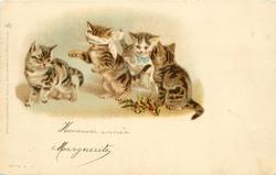 four kittens play blind-man's bluff