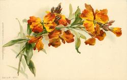 bronze wallflowers