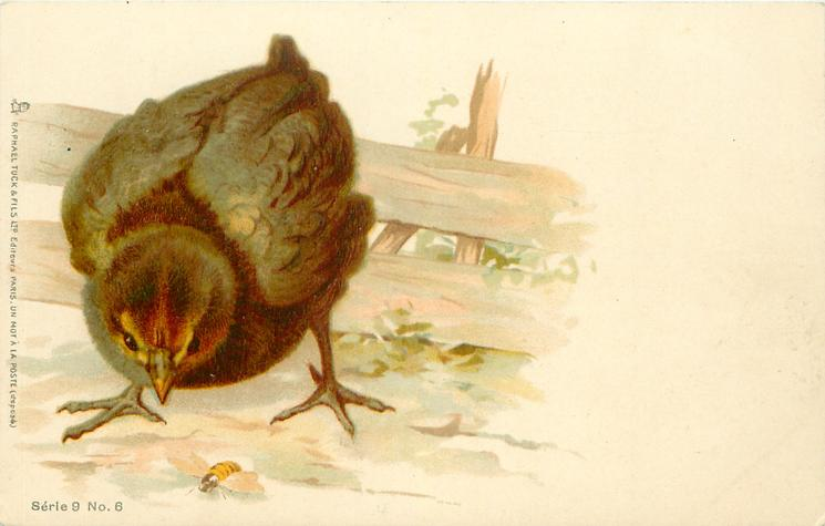 chick stands at left of card looking down at wasp on ground