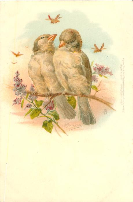 two birds on branch, lilac front left