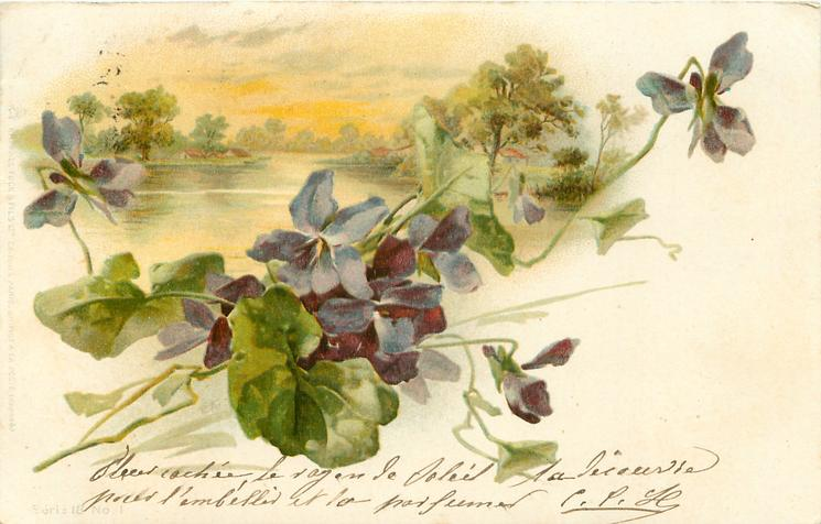 lake with trees on shores, violets