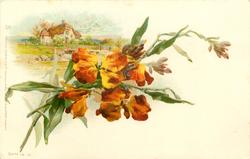 bronze wallflowers, cottages