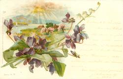 blossom trees, two cottages, lake, sun coming through clouds, violets