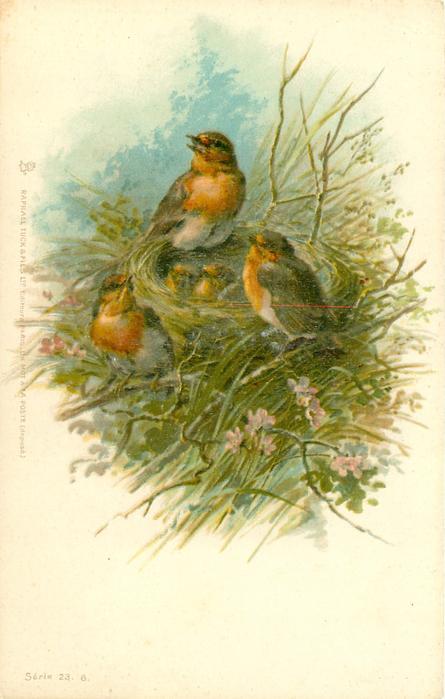 three robins around nest