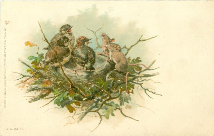 three young birds in nest, two mice also