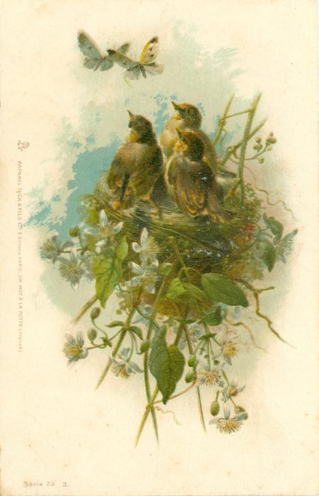 3 greenfinch chicks in nest look up at pair of butterflies