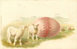 enormous pink Easter egg, two lambs left, two sheep distant back/right