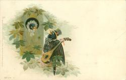 female bird in nestbox seranaded by male playing guitar