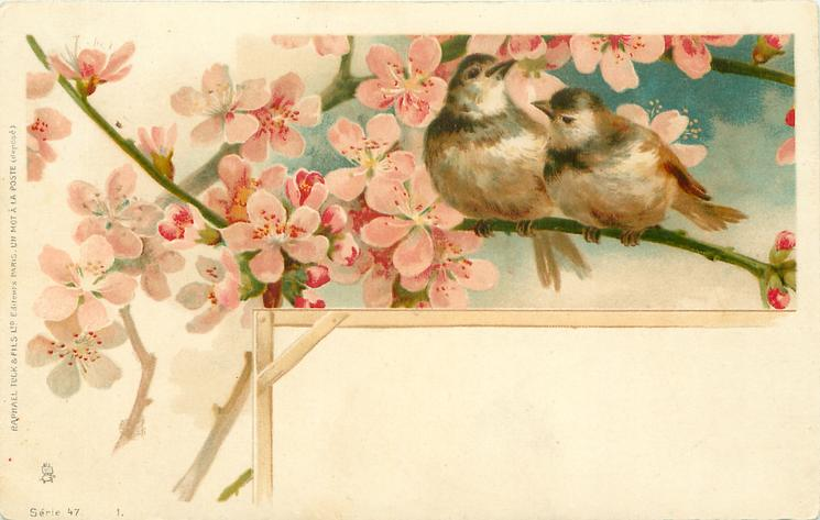 two sparrows sit on slender branch among pink blossom