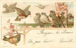 nine finches, pink blossom