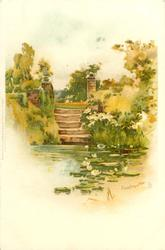 pond with water lilies, steps behind