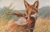fox  with pheasant in mouth