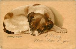 A HAPPY NEW YEAR TO YOU  white puppy with brown head, white muzzle, lies asleep facing right, head front