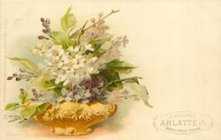 purple & white lilac in low gilt pot