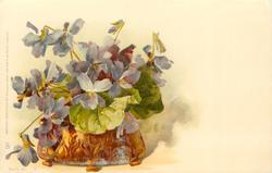 violets in squat gilt pot