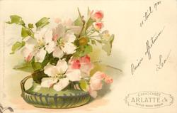 apple blossom & buds in short green pot with handle
