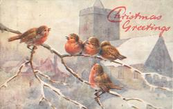 five robins on tree branch, three on upper, one below and one to left, church behind